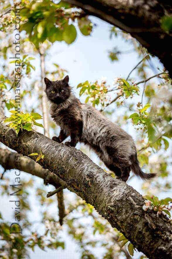 cat rescue mirra