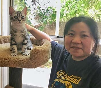 american shorthair kittesn for sale